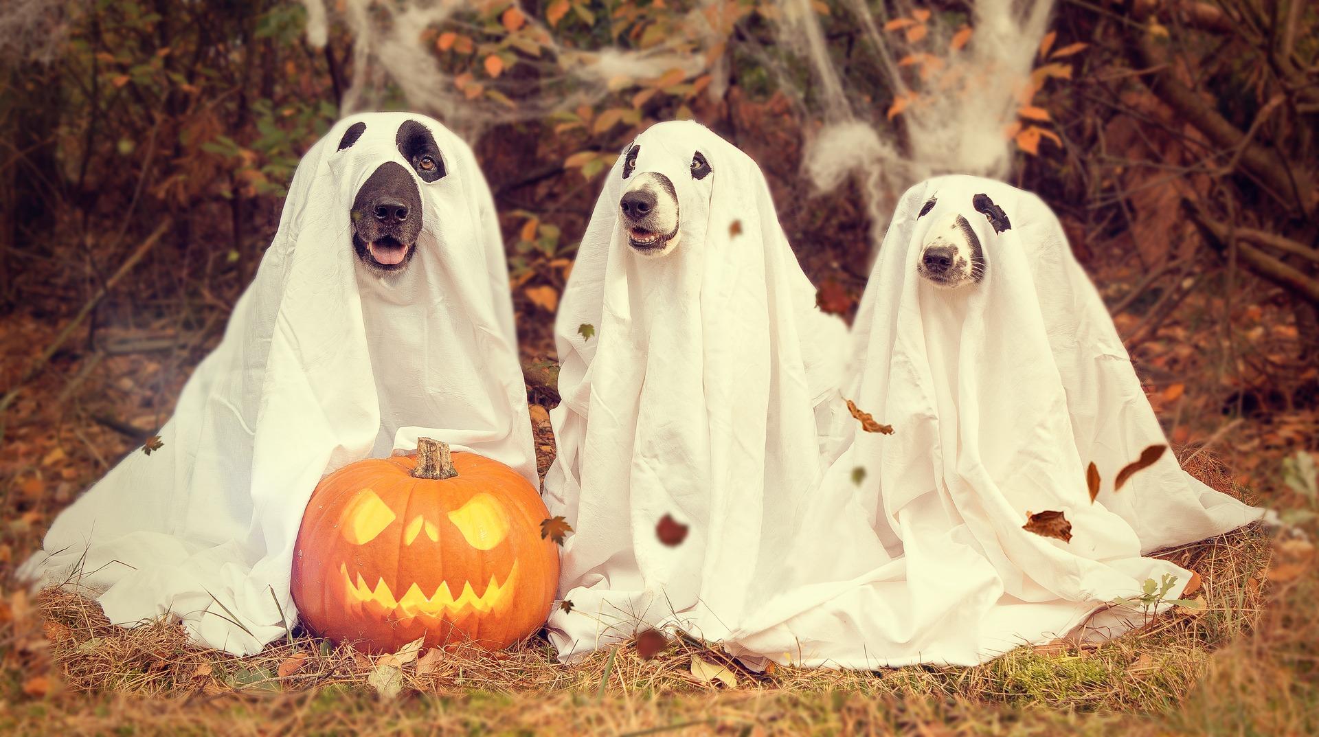 halloween-2870607_1920 (1).jpg